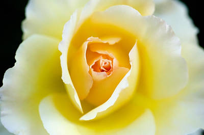Photograph - Smooth Like Butter by Teri Schuster