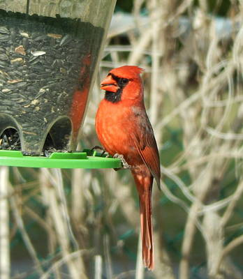 Photograph - Snack Time by Betty-Anne McDonald