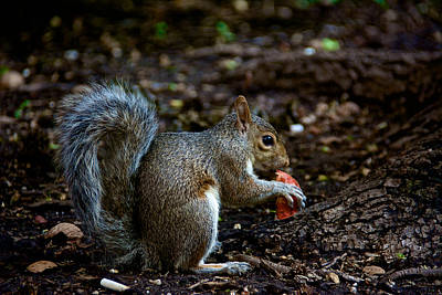 Photograph - Snack Time by Kathi Isserman