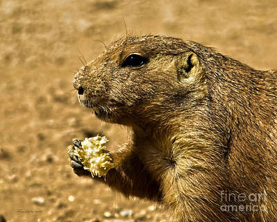 Photograph - Snack Time by Ms Judi