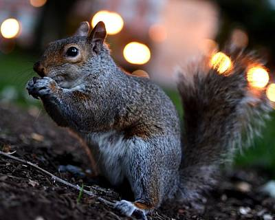 Photograph - Snacking Squirrel by Toby McGuire