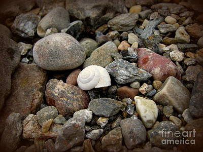 Photograph - Snail Among The Rocks by Leone Lund