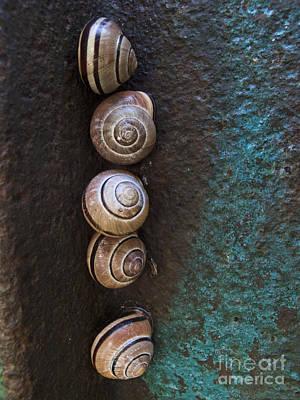 Snail Colony Art Print