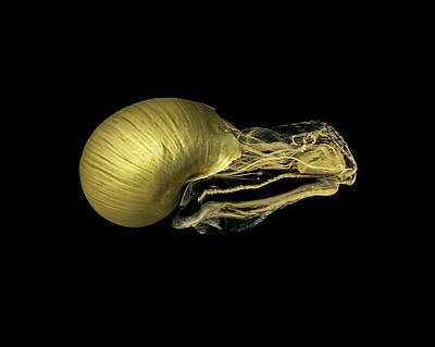 Snail Art Print by Dan Sykes/natural History Museum, London