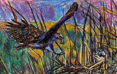Painting - Snail Kite by Kendall Kessler