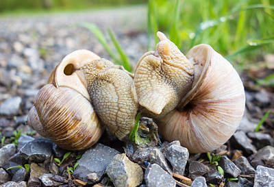 Snail Love - Two Snails Having Fun Art Print
