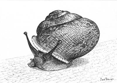 Spiral Drawing - Snail Poe by Cara Bevan