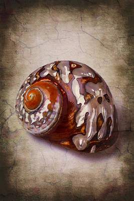 Snail Sea Shell 3 Print by Garry Gay