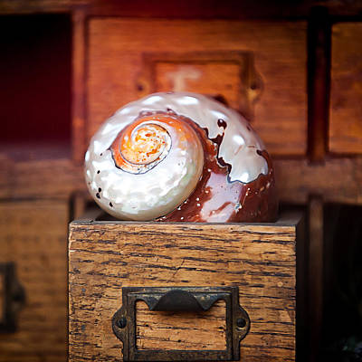 Snail Shell Print by Art Block Collections