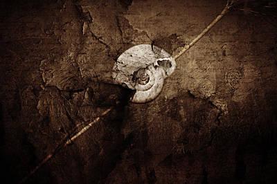 Morning Light Mixed Media - Snail Still Life by Heike Hultsch