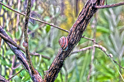 Photograph - Snails by Rhonda Barrett