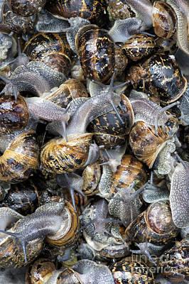 Snails Art Print by Tim Gainey