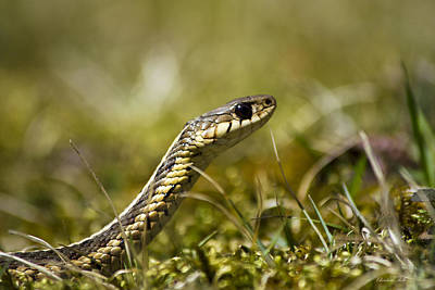 Photograph - Snake Encounter by Christina Rollo