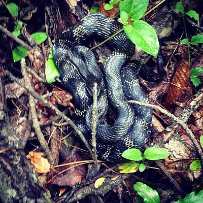 Reptiles Wall Art - Photograph - #snake Found In Our Hike At #ferdinand by Melissa Wyatt