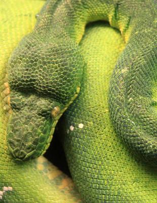 Snake In Green Dress Original