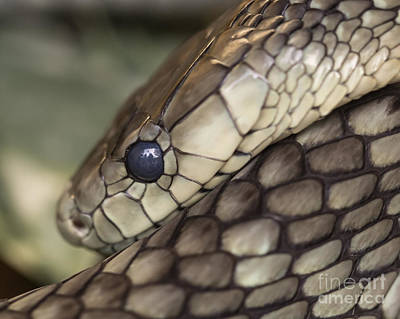Snake Photograph - Snake by Lucid Mood