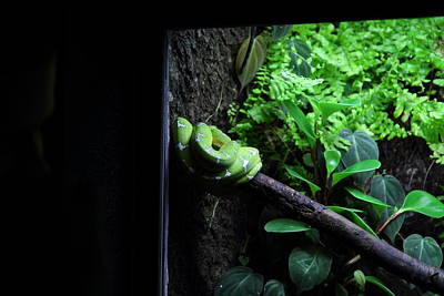 Snake Photograph - Snake - National Aquarium In Baltimore Md - 12124 by DC Photographer