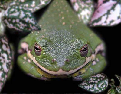 Photograph - Snakefrog by Joseph Tese