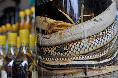 Photograph - Snakes In Snake-flavoured Alcohol Bottles  by Sami Sarkis