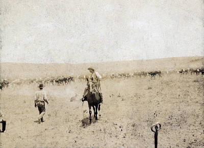 Cattle Drive Photograph - Snaking In A Calf. A Texas Cowboy by Everett