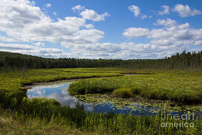 Photograph - Snaking Through The Bog by Barbara McMahon