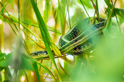 Photograph - Sneaky Snake by Bill Pevlor