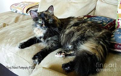 Of Calico Cats Photograph - Snickers Green Eyes by Cheryl Poland