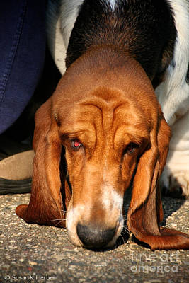Photograph - Sniffer by Susan Herber