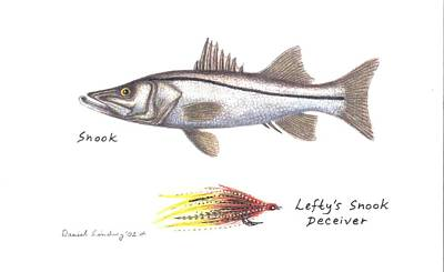 Lefty Drawing - Snook And  Lefty's Snook Deceiver Fly by Daniel Lindvig