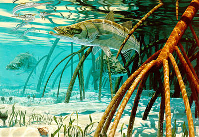Underwater View Painting - Snook In The Mangroves by Don  Ray