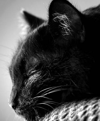 Cat Photograph - Snooze by Camille Lopez