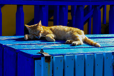 Photograph - Snoozing In The Sun by Haren Images- Kriss Haren