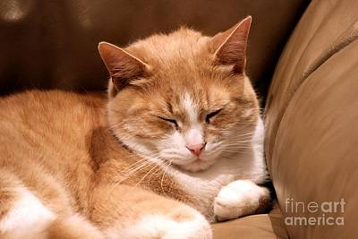 Photograph - Snoozing Kitty by Janice Byer
