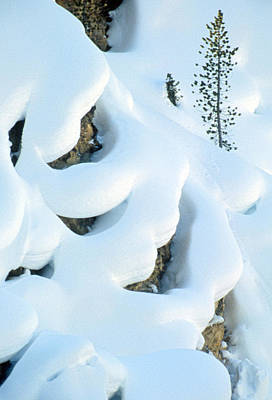 Photograph - Snow And Tree by Judi Baker