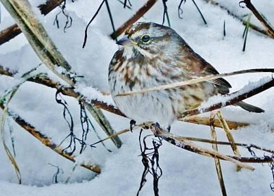 Photograph - Snow Art by VLee Watson