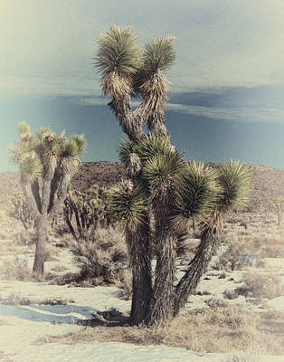 Photograph - Snow At Joshua Tree by Sandra Selle Rodriguez
