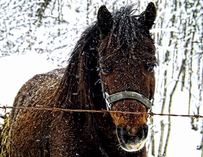 Photograph - Snow Beauty by Kristie  Bonnewell