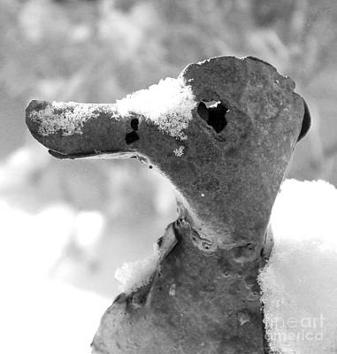 Photograph - Snow-billed Lawn Ornament Looking Left by Nina Silver