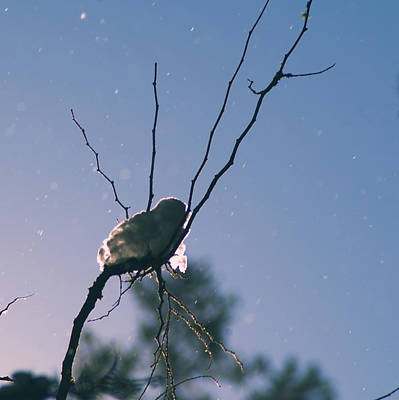 Photograph - Snow Bird by Yulia Kazansky