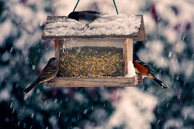 Photograph - Snow Birds by Bonnie Bruno