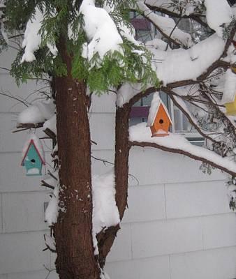 Snow Birds Original by Melissa McCrann
