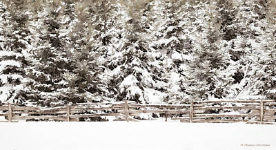 Photograph - Snow Blanket by Barbara McMahon