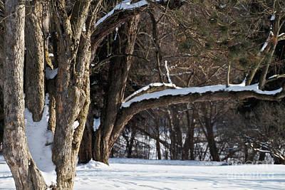 Photograph - Snow Blanket by William Norton