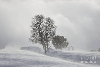 1-war Is Hell Royalty Free Images - Snow blizzard Royalty-Free Image by Gry Thunes