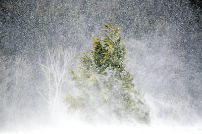 Photograph - Snow Blown by Emily Stauring