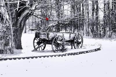 Winter Scene. Winter Landscape. Snow Landscape. Black And White. Birds Photograph - Snow Bound by Mary Timman