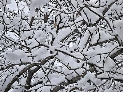Digital Art - Snow Branches 2-1-15 by Doug Morgan