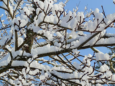 Photograph - Snow Branches by Heather Sylvia