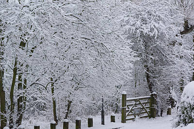 Photograph - Snow Canopy by David Birchall