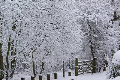 Snow Canopy Art Print by David Birchall